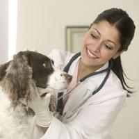 Ветеринарный терапевт