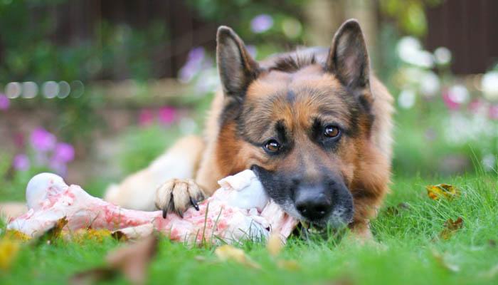 давать ли кости собаке?