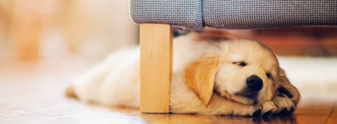Чистка зубов собакам и кошкам