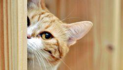 Летняя акция - кастрация кота за 1600 рублей