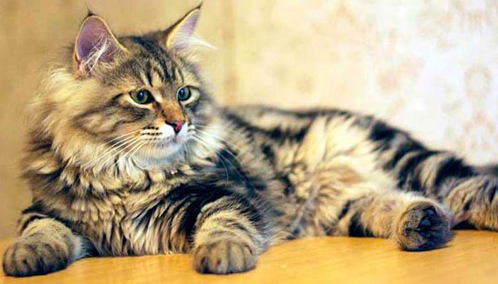 Кот Ютас и мальт-паста