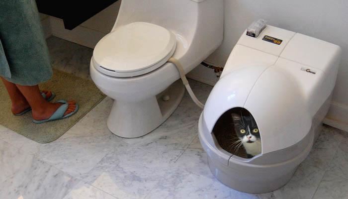 Туалета для кошки
