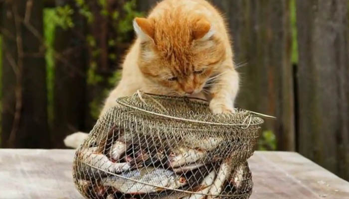 Опасные продукты для кошек