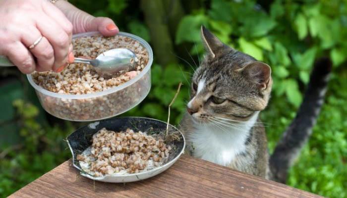 Можно ли кошку кормить кашами?