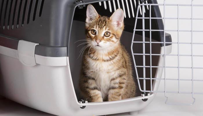 Перевозка кошки в переноске