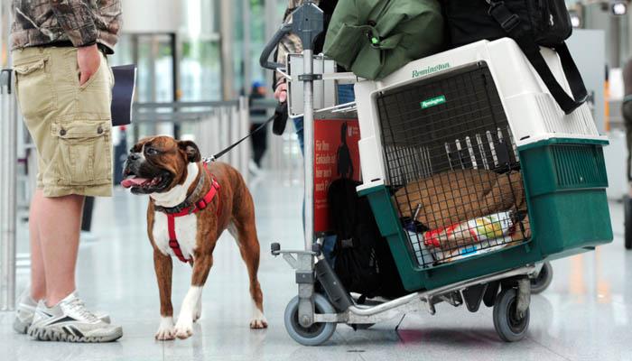 Новые правила перевозки животных в компании Аэрофлот