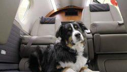 Правила перевозки животных самолетами «Аэрофлота» меняются